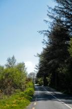 Tra Ashford e Glendalough